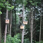 四つの巣箱
