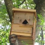 入口が三角の巣箱