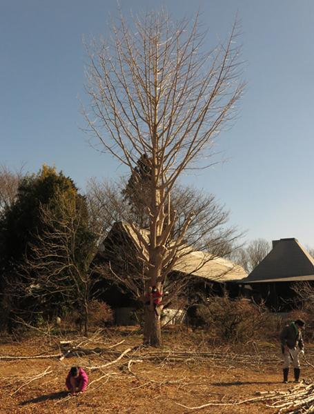 いわむらかずお絵本の丘美術館のイチョウの木